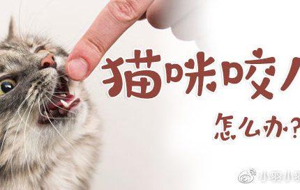 猫咪乱咬人怎么办?