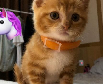 猫咪行为大赏,他为什么这么做?