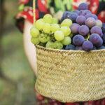 你知道如何才能挑到好吃的葡萄吗?