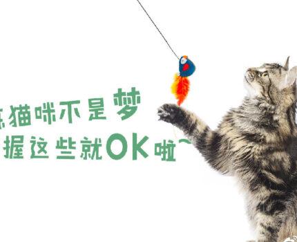 训练猫咪不是梦,掌握这些就OK啦~