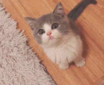 新人如何养新生猫咪?