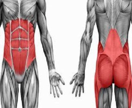 核心肌群是什么都不知道,又谈何训练?