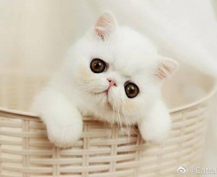 给新手买猫一些真诚的建议