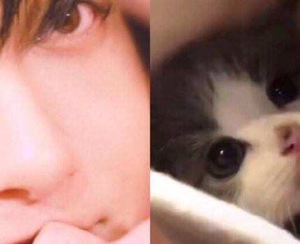 黄子韬是一只猫妖