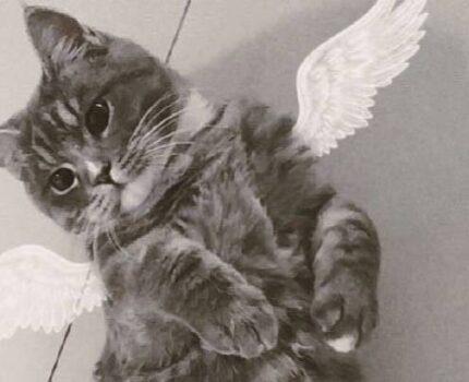我最爱的那只猫猫离开我了