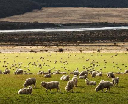 天一冷要进补,家里老人为何直说要吃羊?