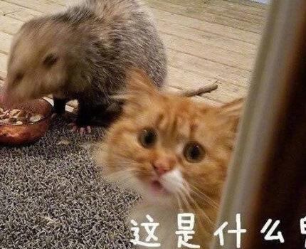 猫被耗子欺负成这样,真的是十分的可爱了。