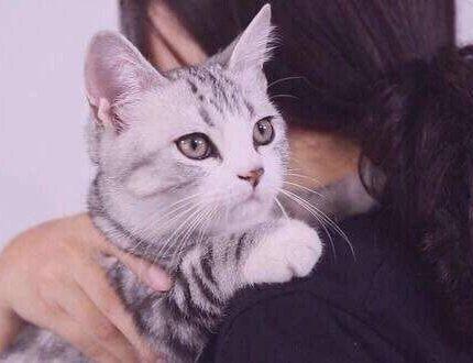 如何让小猫咪不怕生人