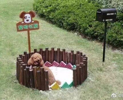 小区的宠物公厕,你会让狗狗用吗?