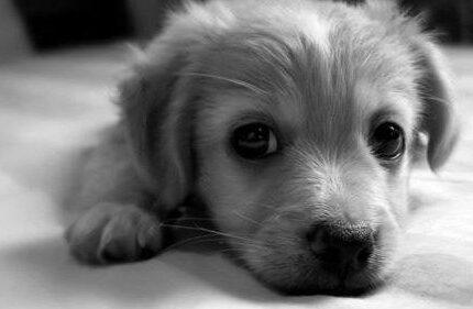 狗狗为什么喜欢甩耳朵