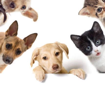 """#宠物沟通,前世印记之""""我害怕""""#"""
