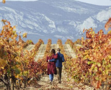 探秘:里奥哈葡萄酒的前世今生