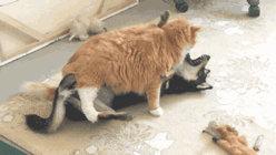 猫狗总打架,它们之间真的有仇吗?