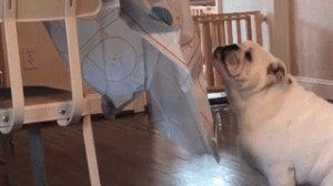 狗狗为了吃,到底有啥是做不出来的?