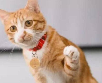 告诉我,那么爱猫为什么?