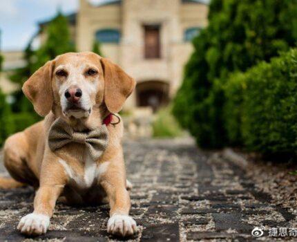 狗是人类最忠实的朋友,爱它请善待它们