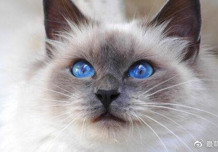 养一只不常见的猫,是种什么体验?